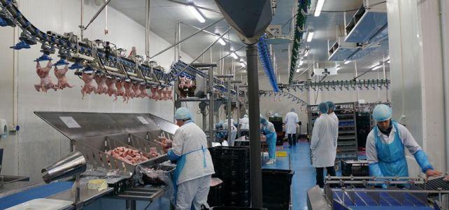 Fabrica de ambalat carne de pui Germania