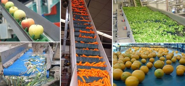 Procesare fructe si legume Olanda