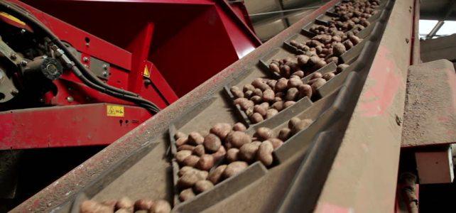 Operator depozit de cartofi