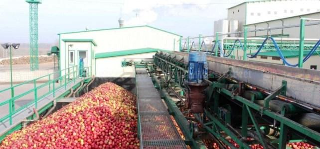 Se cauta personal depozit de mere