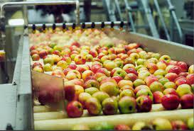 Muncitori legume, fructe de sezon Germania