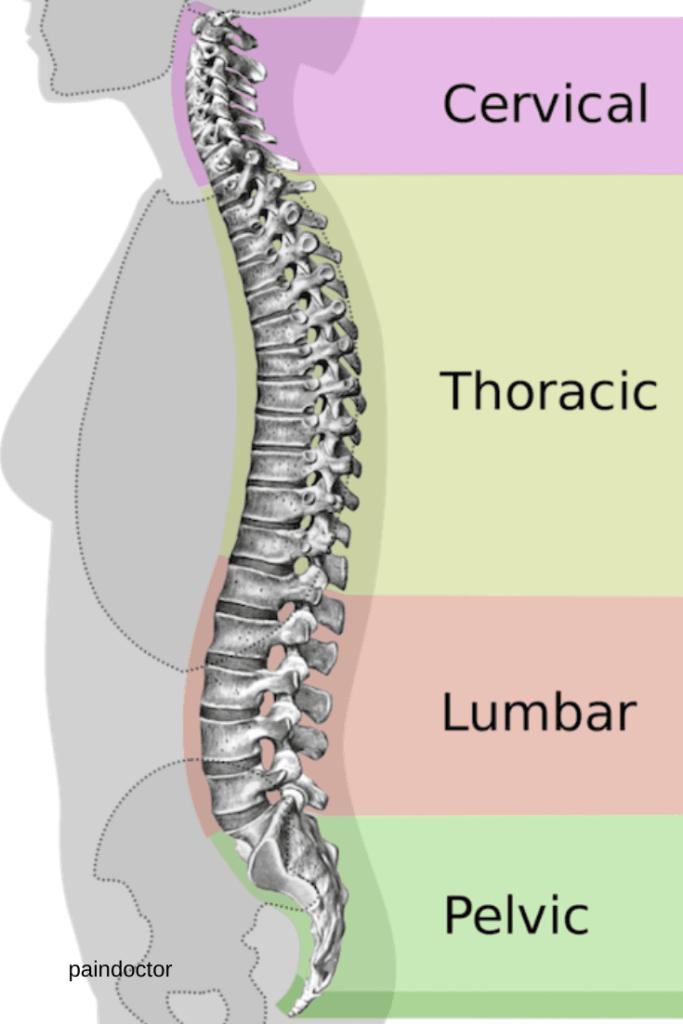 osteoporoza și testul dexa