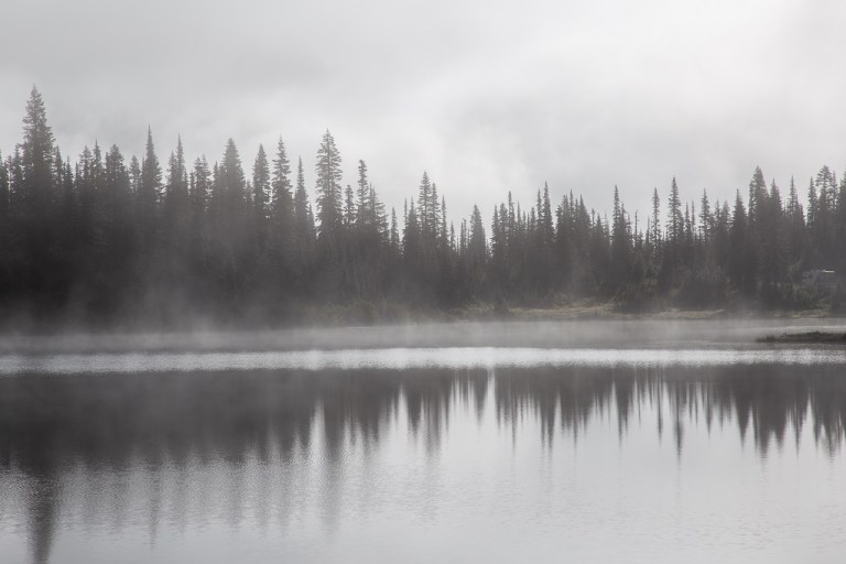 Reflection Lake - choinki