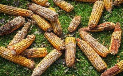 Post-harvest losses In Ghana; The Way Forward