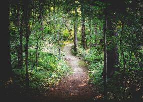 Une randonnée en pleine nature