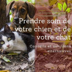 Conseils et solutions alternatives pour prendre soin de votre chien et votre chat