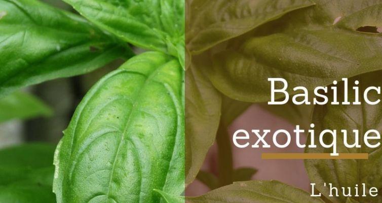 huile essentielle de basilic exotique