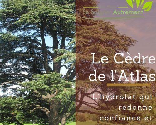 hydrolat de cèdre de l'Atlas