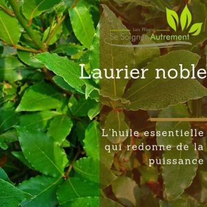 Fiche solution-phyto #15 – Huile essentielle de Laurier Noble