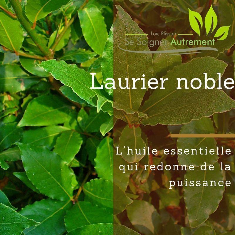 Huile essentielle de Laurier Noble, l'huile essentielle qui redonne de la puissance