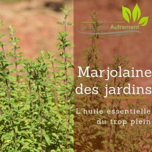 Fiche solution-phyto #37 – Huile essentielle de Marjolaine des jardins