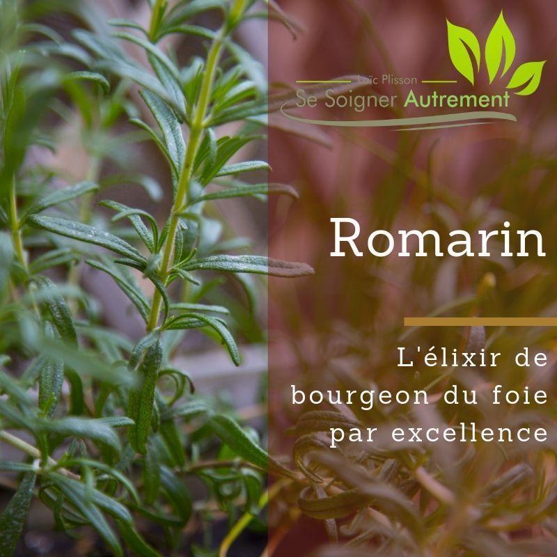 L'élixir de bourgeon de romarin, le grand remède du foie