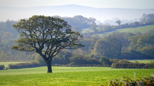Tree on Dartmoor with a beautiful background