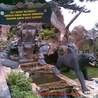 Rajawali, Macan Kumbang dan Batu Karang
