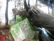 hewan mendekat mobil