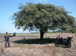 africa van java TN Baluran Situbondo