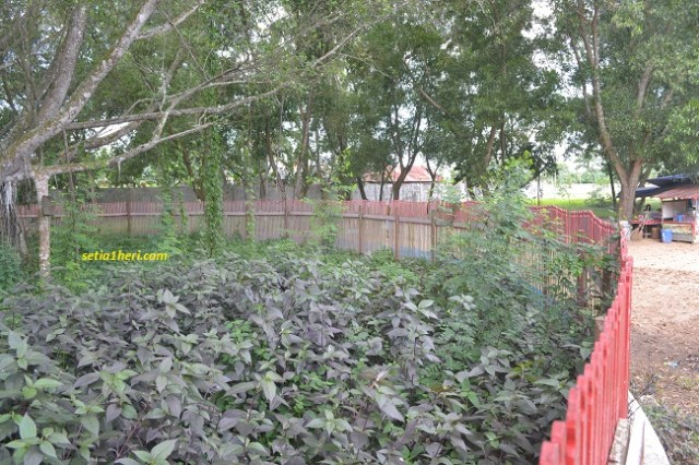 kondisi semak-semak di pulau kemaro tahun 2015