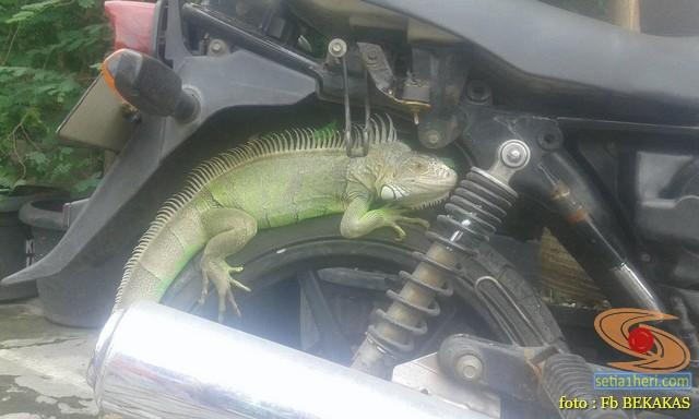 kumpulan foto biker dan hewan peliharaan brosis (3)