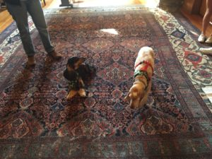 Dudley and Molly greet the guests in A211. Photo courtesy of Callista Arida