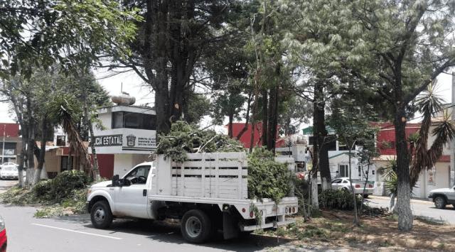 Metepec realiza trabajos de poda de árboles