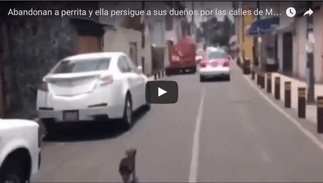 Perrita corre tras taxi en calles de Iztapalapa luego de ser abandonada