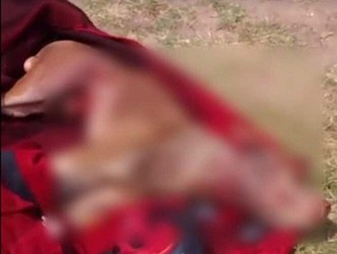 Mujer mató a machetazos al pitbull de su vecina en Guanajuato