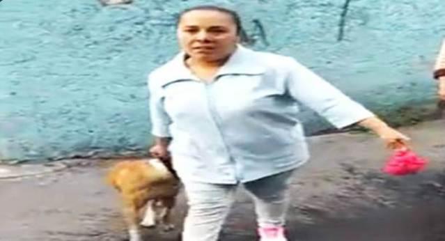 Un pitbull mata un perro y la dueña los amenaza #LadyPitbull