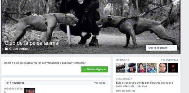 Promueven peleas de animales en Facebook en Saltillo, los denuncian