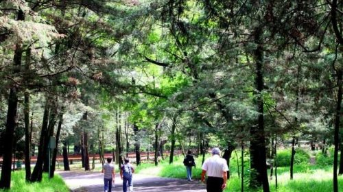 Detienen a otro violador de mujeres en Bosque de Tlalpan