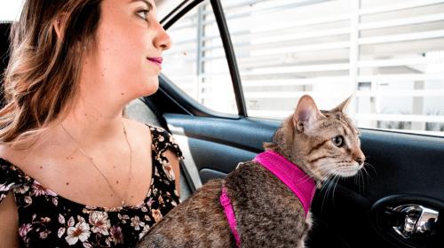 ¡Cabify Pet llega a Toluca!