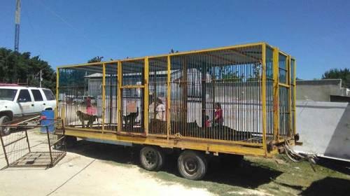 Por maltrato en circo Profepa asegura 7 ejemplares silvestres