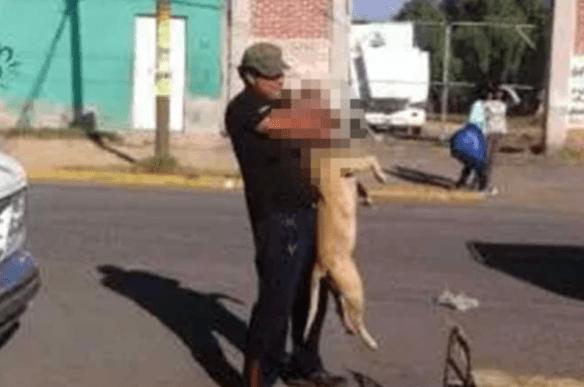 Sujeto ahorca a perro en Ecatepec; 'podía morder a alguien'