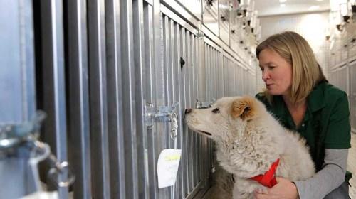 Rescatan de Corea del Sur a 46 perros, eran para consumo humano