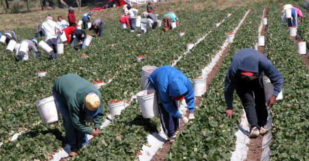 Dará EU pensión a extrabajadores migrantes de México
