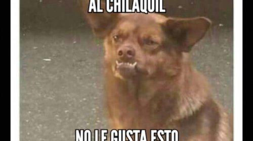 """La historia de """"Chilaquil"""" los memes que invaden las redes"""
