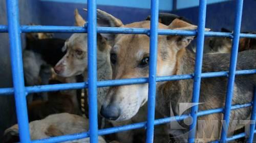 Indemnizan a víctimas de ataques de perros en Toluca