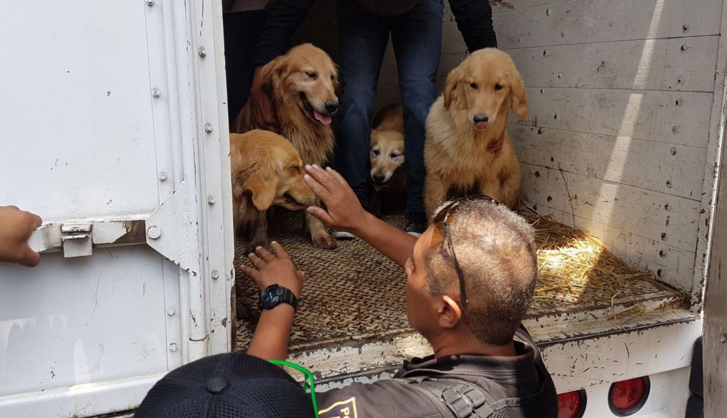 Toluca, primer municipio en tener un padrón de mascotas en el Edomex