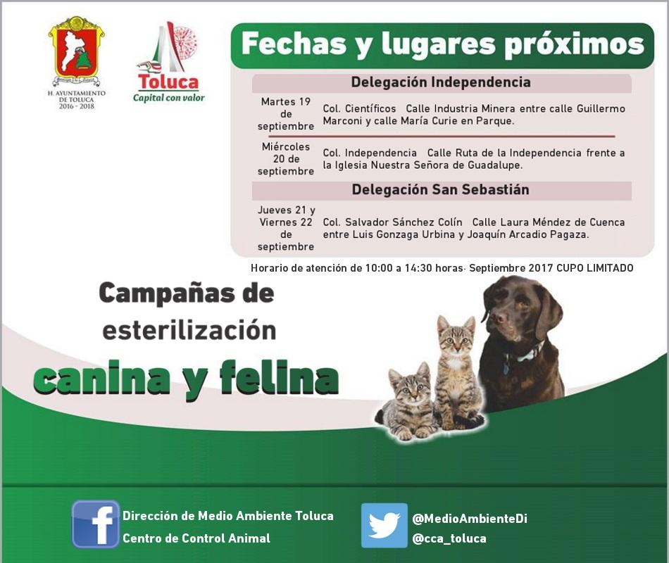 Continúa campaña de esterilización en delegaciones de Toluca