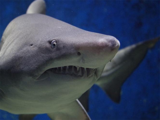 Hombre mordido por tiburón se contagia de bacteria comecarne