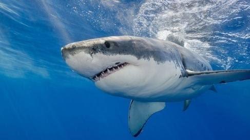 Joven es atacado por 10 tiburones; vive para contarlo