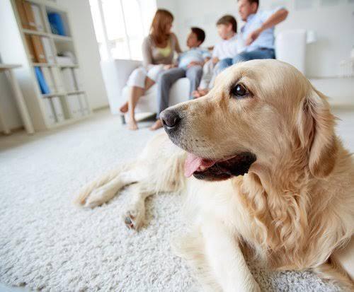 Nueva Ley en China; únicamente permitirán tener un perro por familia