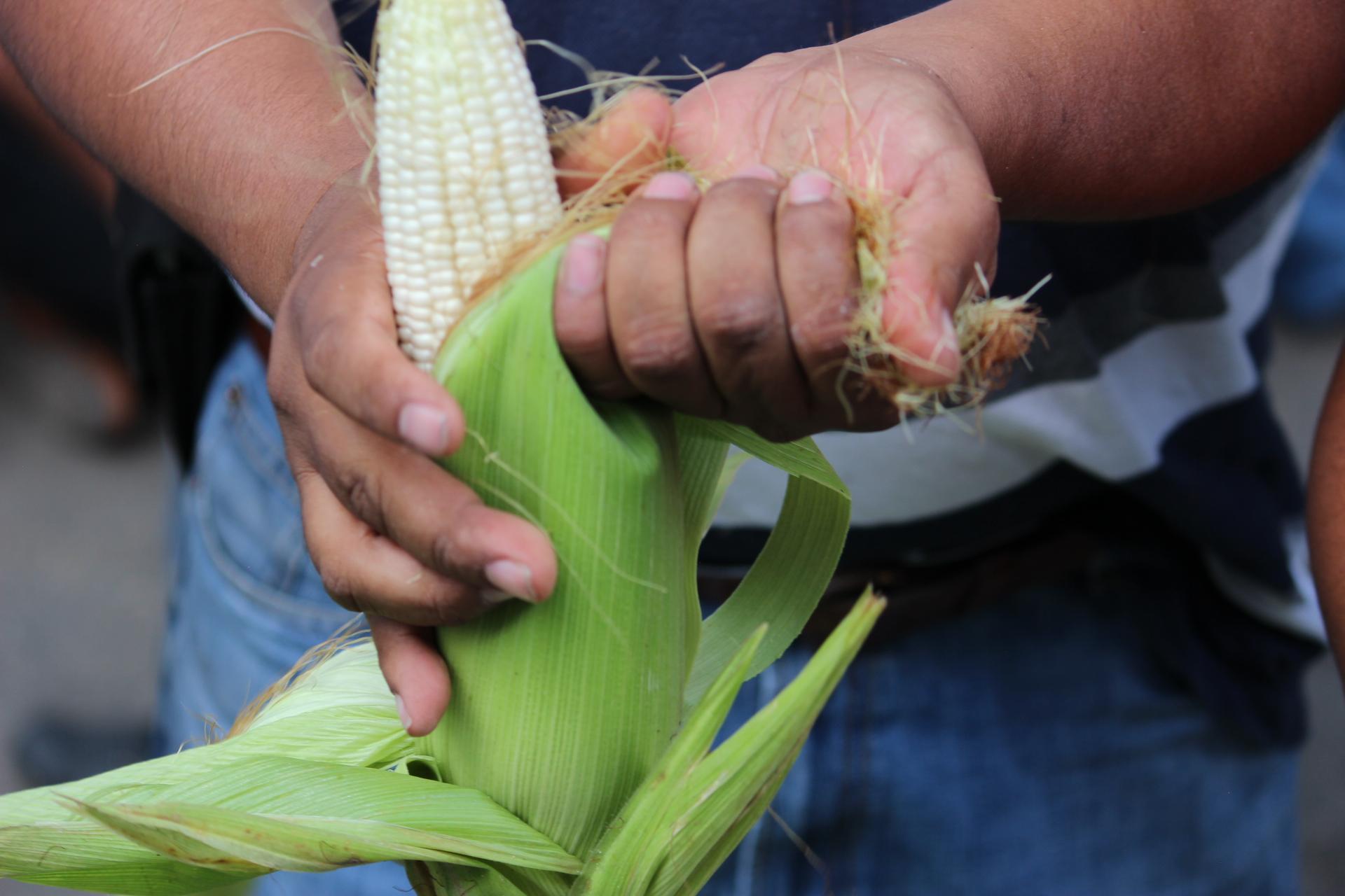 Va T-MEC y Ley De Variedades Vegetales por privatización de semillas