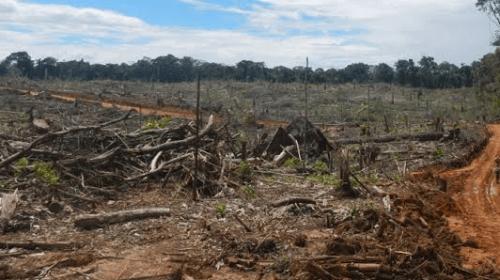 Detener destrucción ambiental en nicolás romero y ecatepec,  Pide la legislatura al ejecutivo. Noticias en tiempo real