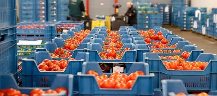 Tomateros se amparan contra arancel impuesto por estados unidos