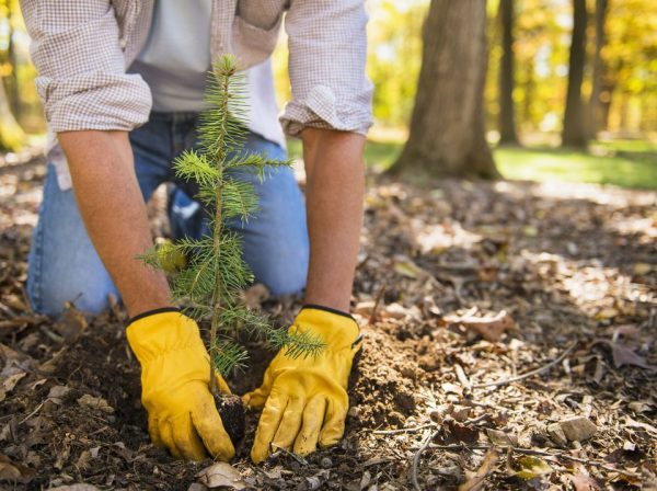 Plantan 3 mil árboles en Morelos
