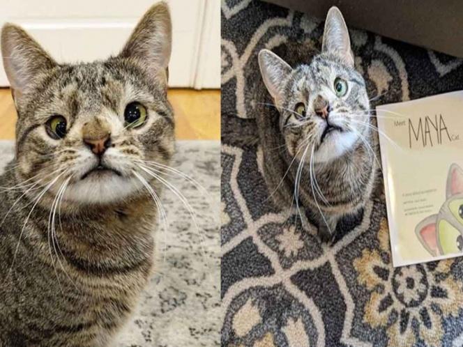 Gato sufre 'Síndrome de Down' y su dueña lanza libro para concientizar