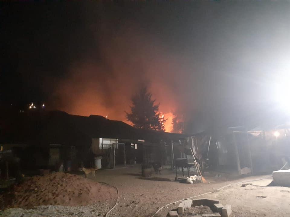 Denuncian incendio en refugio donde hay más de 300 animales en Edoméx