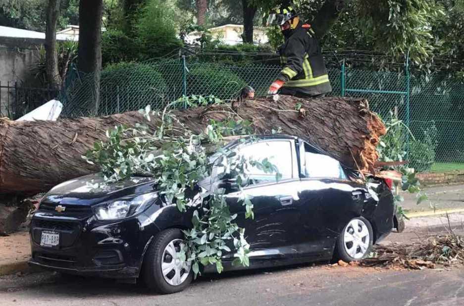 Árbol cae sobre un auto en los Viveros de Coyoacán