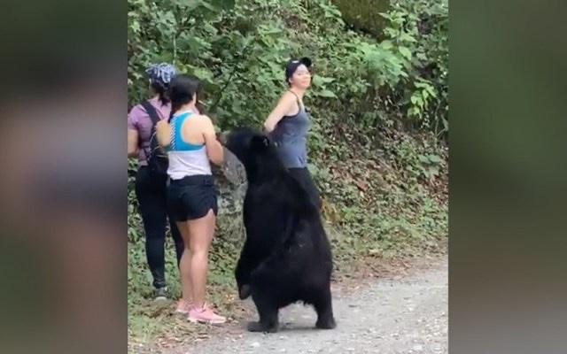 Capturan a oso de Chipinque y lo castran para liberarlo