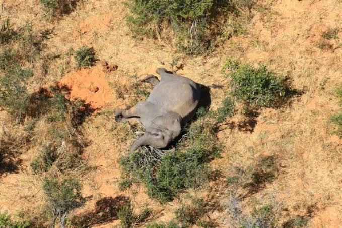 34 elefantes han muerto por una extraña bacteria en Zimbabue